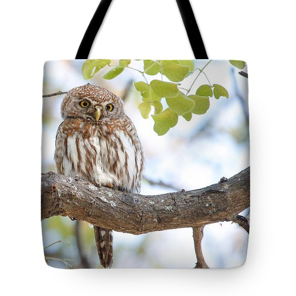 Tote Bag featuring the photograph Pearl-spotted Owlet -  Chevechette Perlee - Glaucidium Perlatum   by Nature and Wildlife Photography