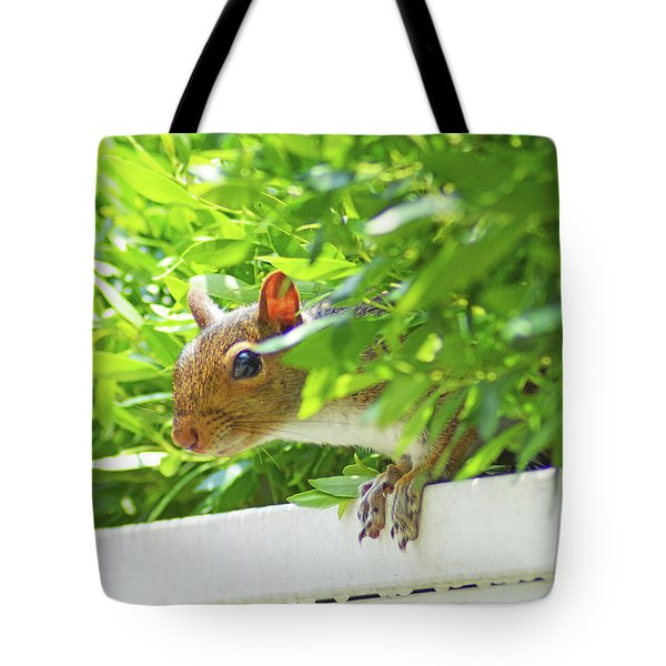 Peek-a-boo Gray Squirrel Tote Bag