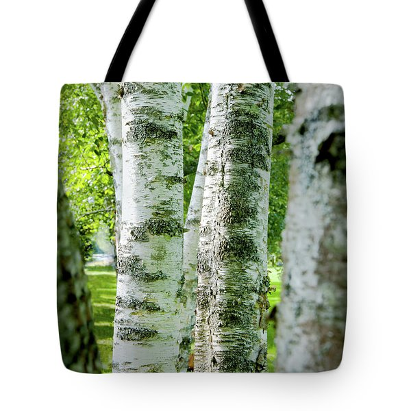 Tote Bag featuring the photograph Peek A Boo Birch by Greg Fortier