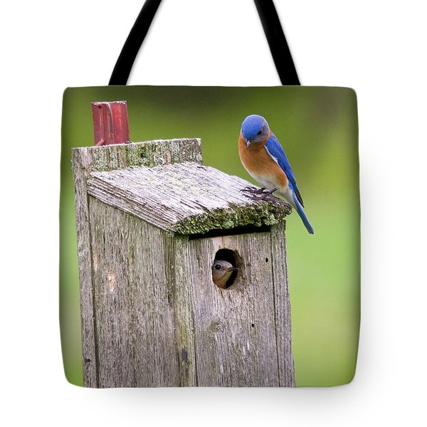 Peek A Boo Blue Tote Bag
