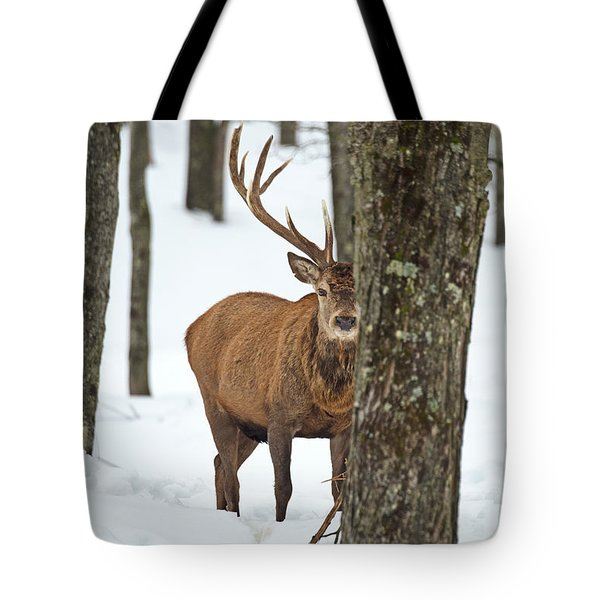 Tote Bag featuring the photograph Peekaboo.. by Nina Stavlund