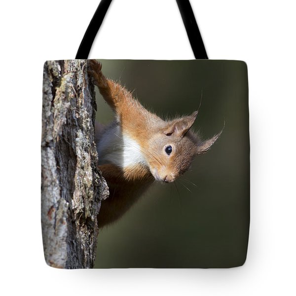 Tote Bag featuring the photograph Peekaboo - Red Squirrel #29 by Karen Van Der Zijden