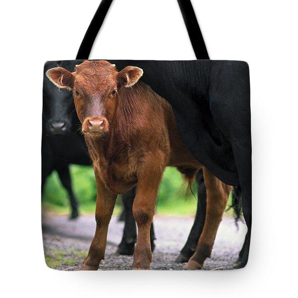 Peeking Calf  Tote Bag by Sally Weigand