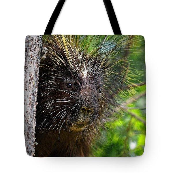 Peeking Porcupine Tote Bag