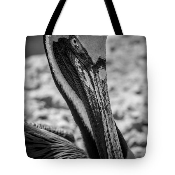 Pelican In Florida Tote Bag by Jason Moynihan