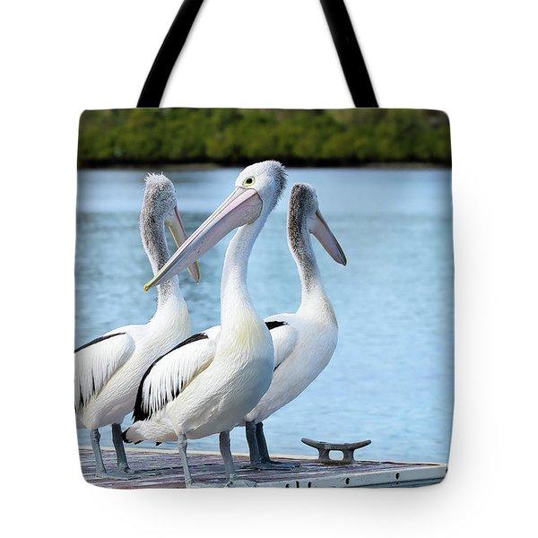Pelicans 6663. Tote Bag