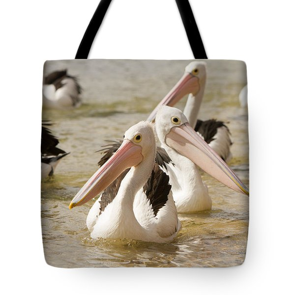 Pelicans Tote Bag by Craig Dingle