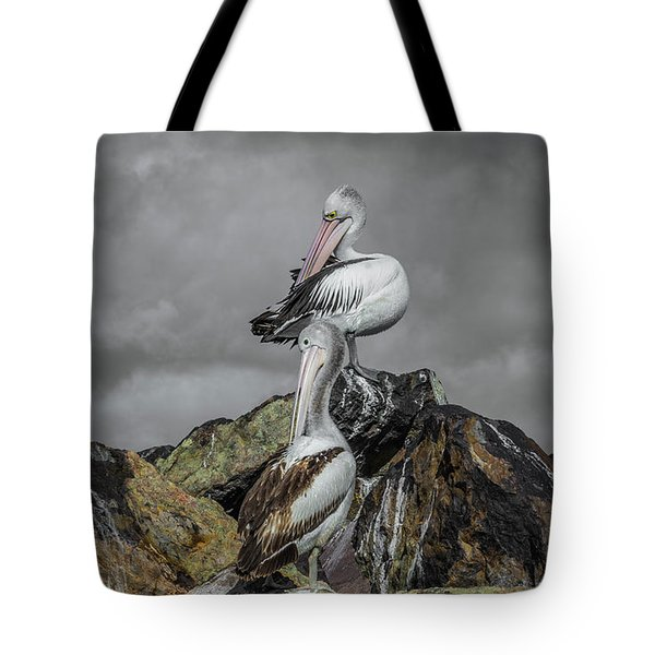 Pelicans On Rocks Tote Bag by Racheal Christian