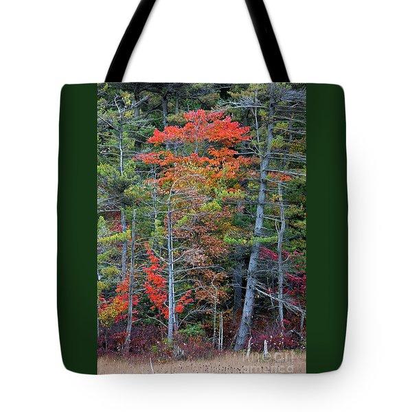 Pennsylvania Laurel Highlands Autumn Tote Bag by John Stephens