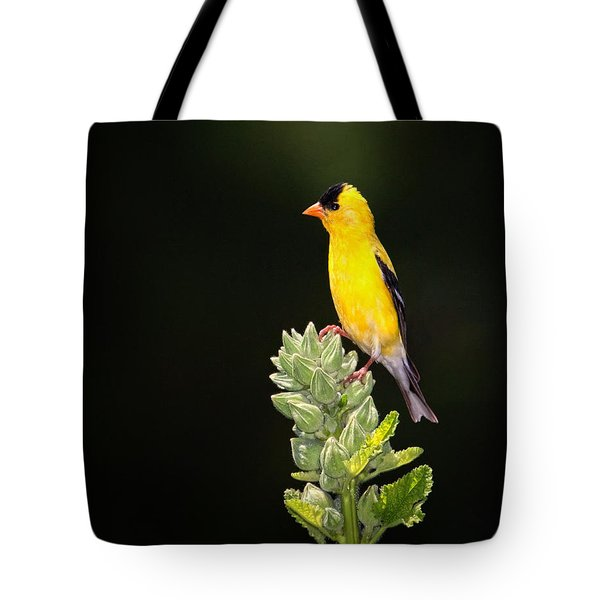 Perched American Goldfinch Tote Bag