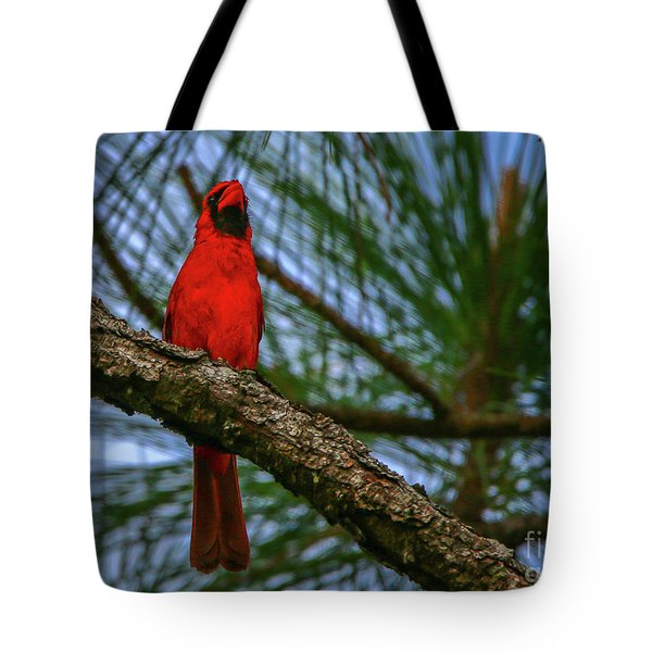 Tote Bag featuring the photograph Perched Cardinal by Tom Claud