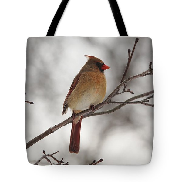 Perched Female Red Cardinal Tote Bag