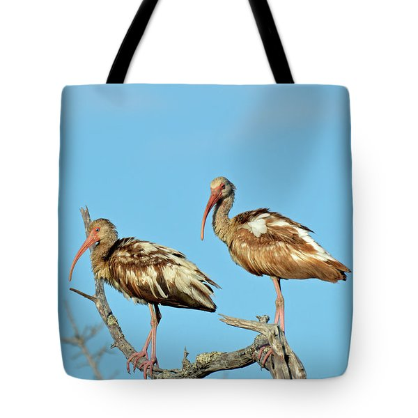 Perched White Ibises Tote Bag by Bruce Gourley