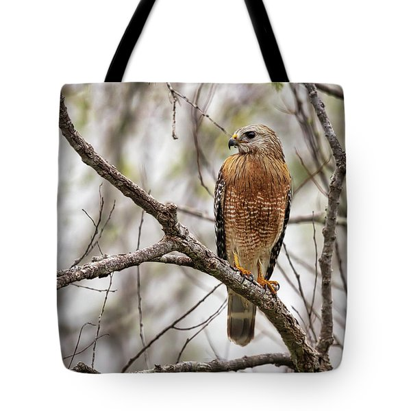 Perched Red Shouldered Hawk Tote Bag