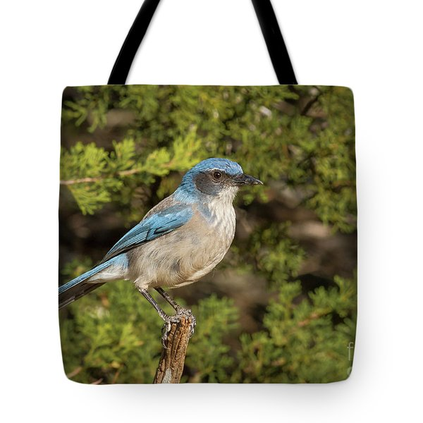 Perched Scrub Jay Tote Bag