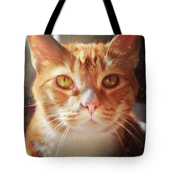 Percy In The Sun Tote Bag