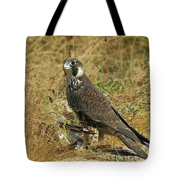 Peregrine Falcon Tote Bag by Doug Herr