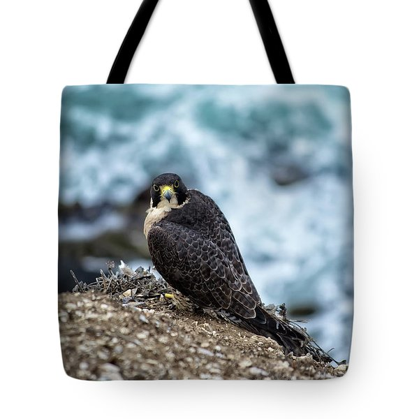 Peregrine Falcon - Here's Looking At You Tote Bag