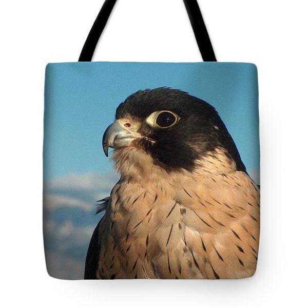 Peregrine Falcon Tote Bag by Tim McCarthy