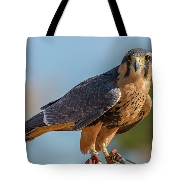 Peregrine Falcon Wildlife Art By Kaylyn Franks Tote Bag