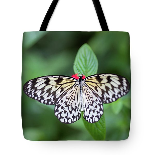 Tote Bag featuring the photograph Perfect Butterfly Pose by Raphael Lopez