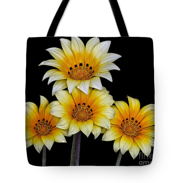 Tote Bag featuring the photograph Peruvian Daisies by Shirley Mangini
