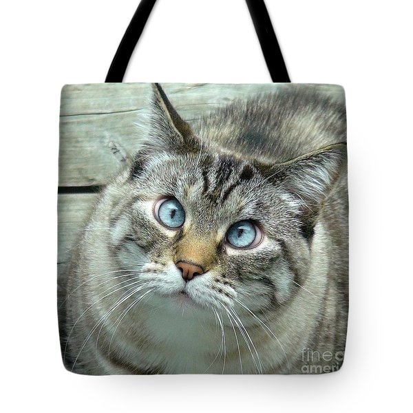 Pet Portrait - Lily The Cat Four Tote Bag