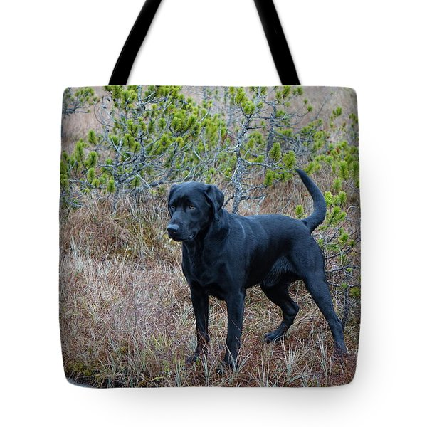Pet Portrait - Radar Tote Bag