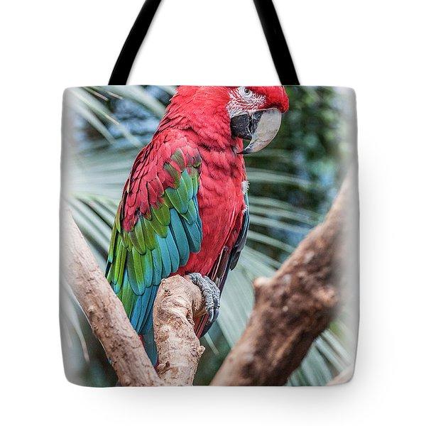 Peter Parrot Tote Bag