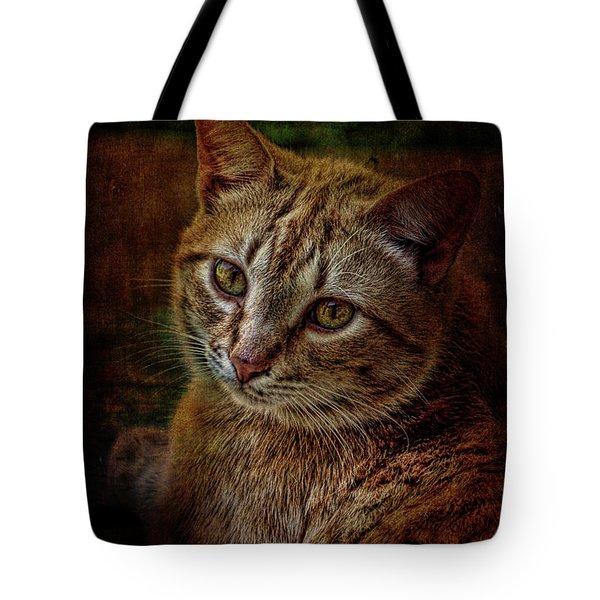 Pets Fat Cat Portrait 2 Tote Bag