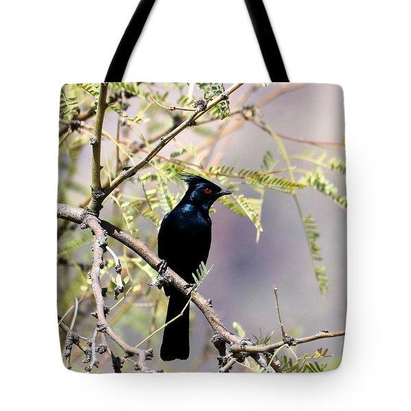 Phainopepla Black Cardinal Tote Bag