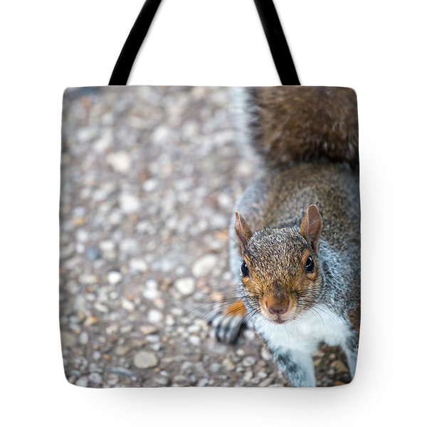 Photo Of Squirel Looking Up From The Ground Tote Bag