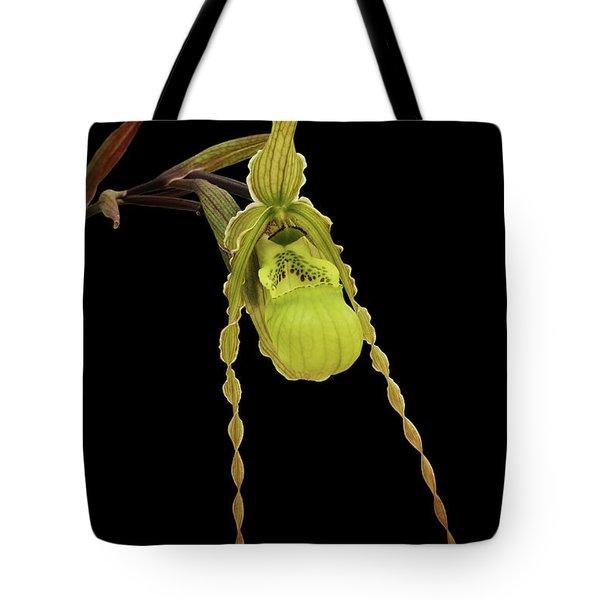 Phragmipedium Richteri Orchid Tote Bag