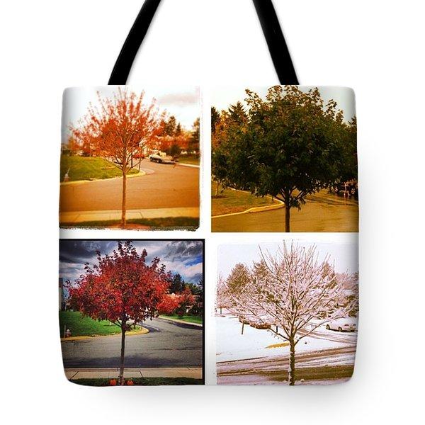 Seasons Of My Maple Tree Tote Bag