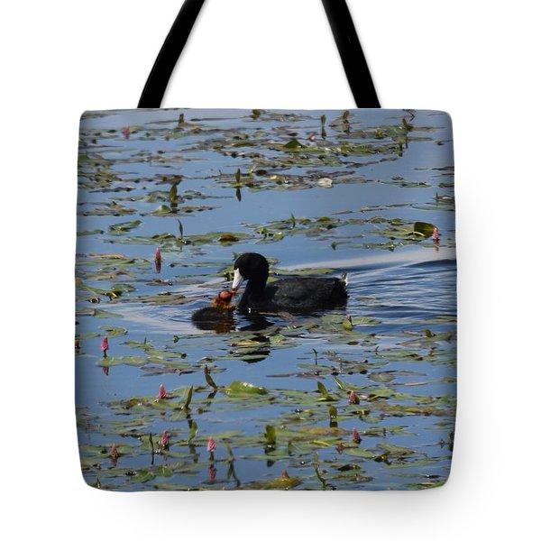 Pied Billed Grebe Lake John Swa Co Tote Bag