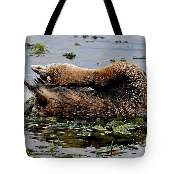 Pied-billed Grebe Spreading Oil Tote Bag