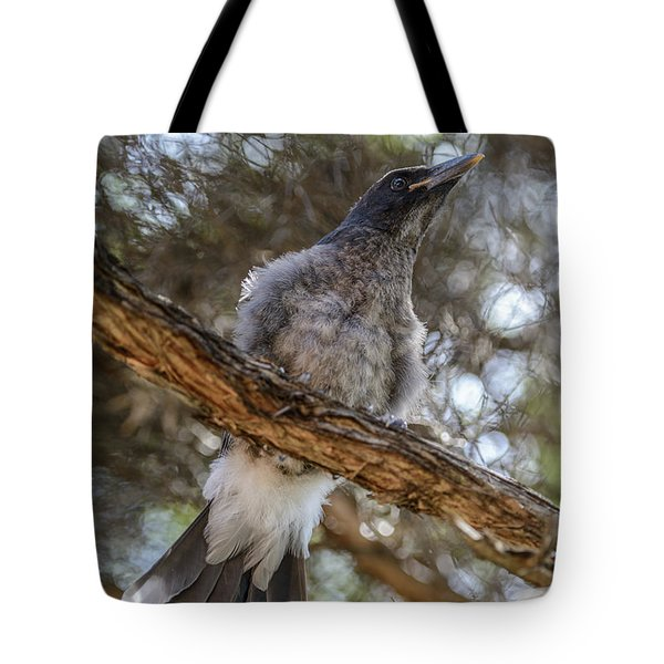 Pied Currawong Chick 1 Tote Bag