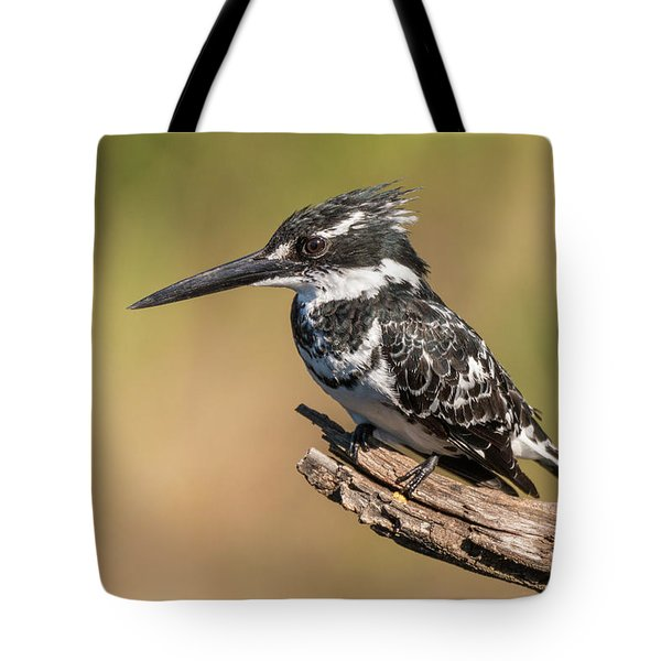 Pied Kingfisher Tote Bag