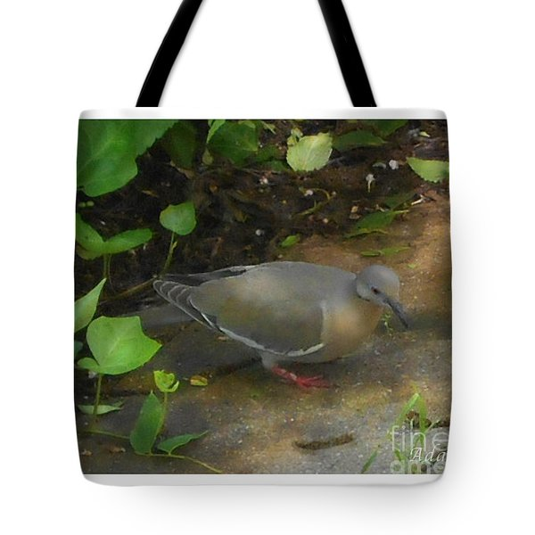 Tote Bag featuring the photograph Pigeon by Felipe Adan Lerma