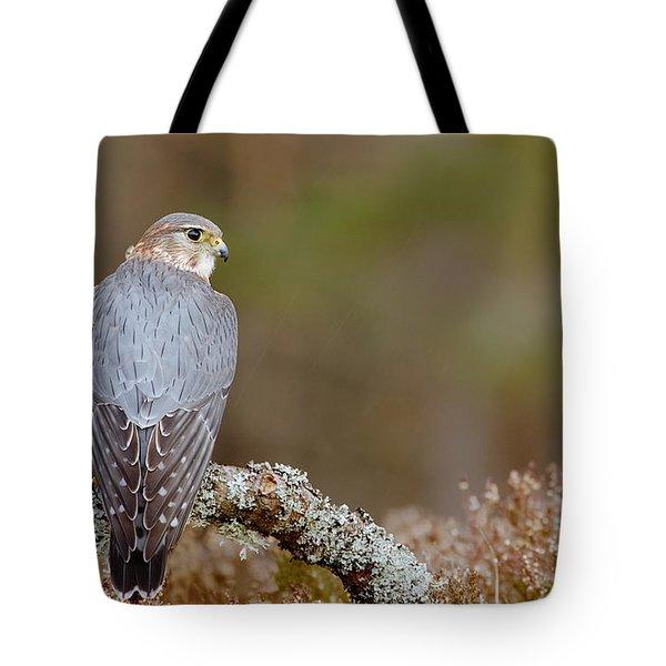 Pigeon Hawk Tote Bag