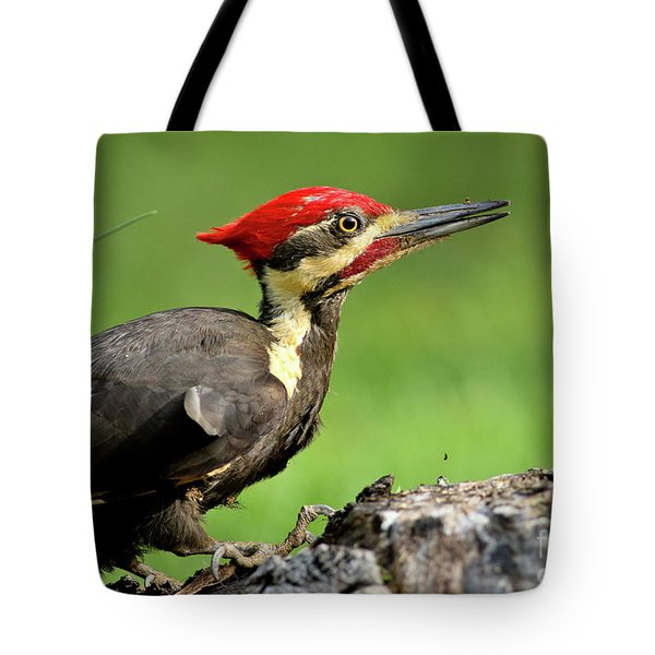 Pileated 2 Tote Bag by Douglas Stucky