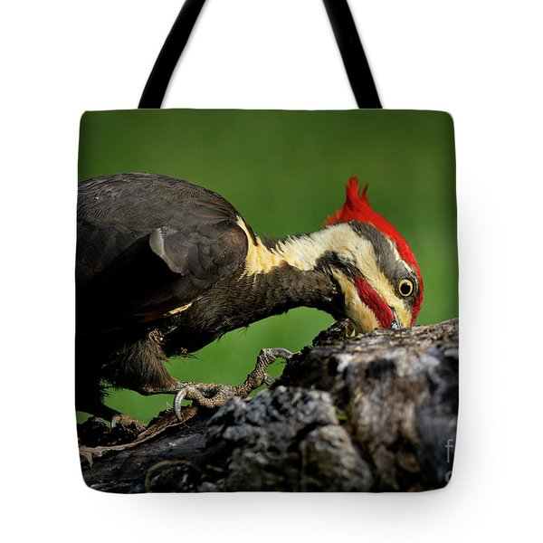 Tote Bag featuring the photograph Pileated 3 by Douglas Stucky