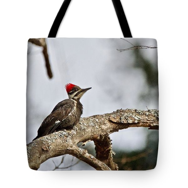 Tote Bag featuring the photograph pileated Woodpecker 1068  by Michael Peychich