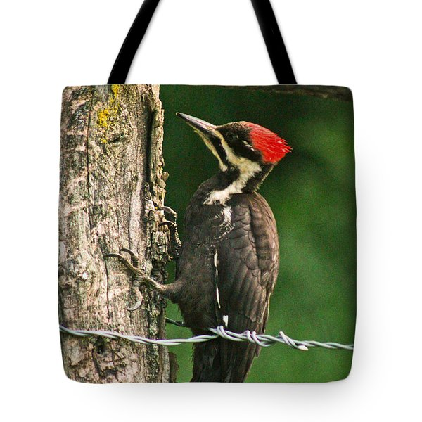 Tote Bag featuring the photograph Pileated Woodpecker by Jessica Brawley
