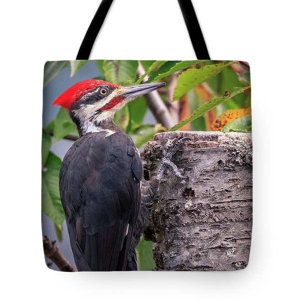Tote Bag featuring the photograph Pileated Woodpecker by Windy Corduroy