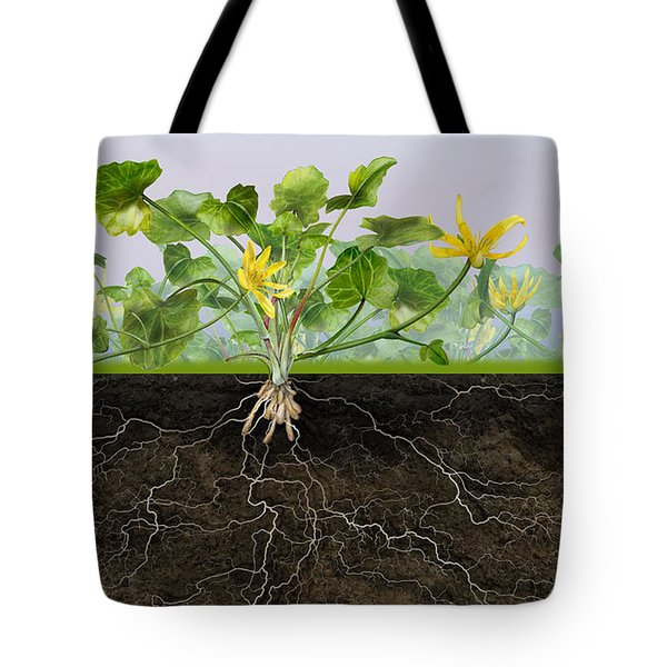 Pilewort Or Lesser Celandine Ranunculus Ficaria - Root System -  Tote Bag
