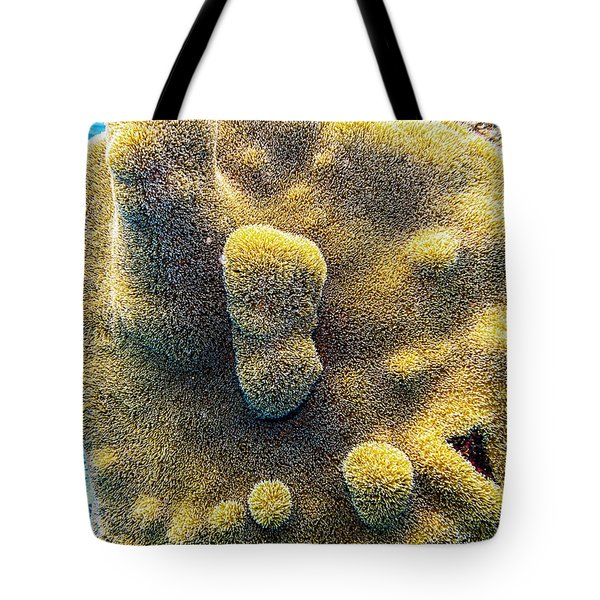Tote Bag featuring the photograph Pillar Coral by Perla Copernik