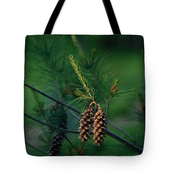 Pine Cones At Dusk Tote Bag