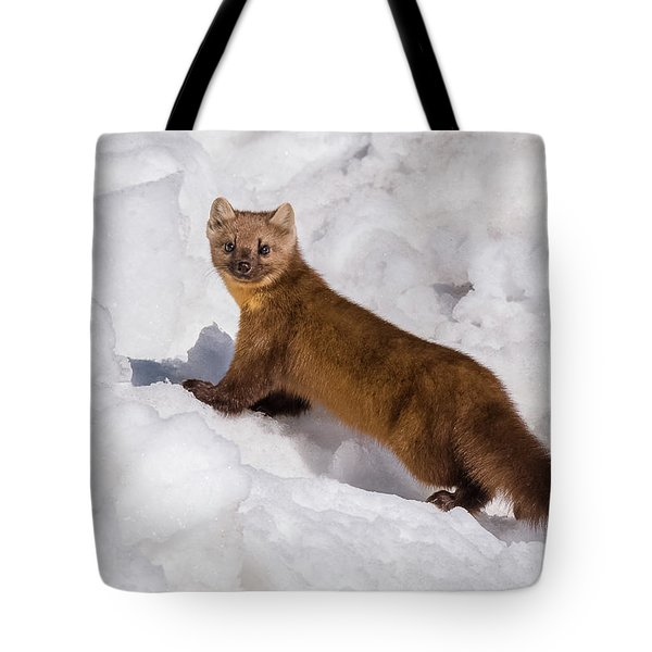Pine Marten In Snow Tote Bag by Yeates Photography