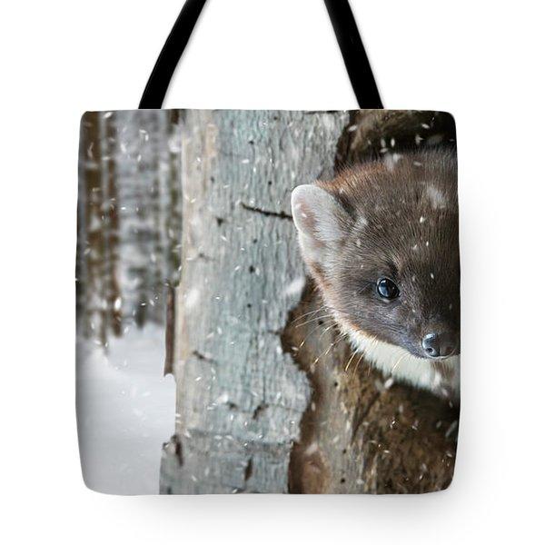 Pine Marten In Tree In Winter Tote Bag